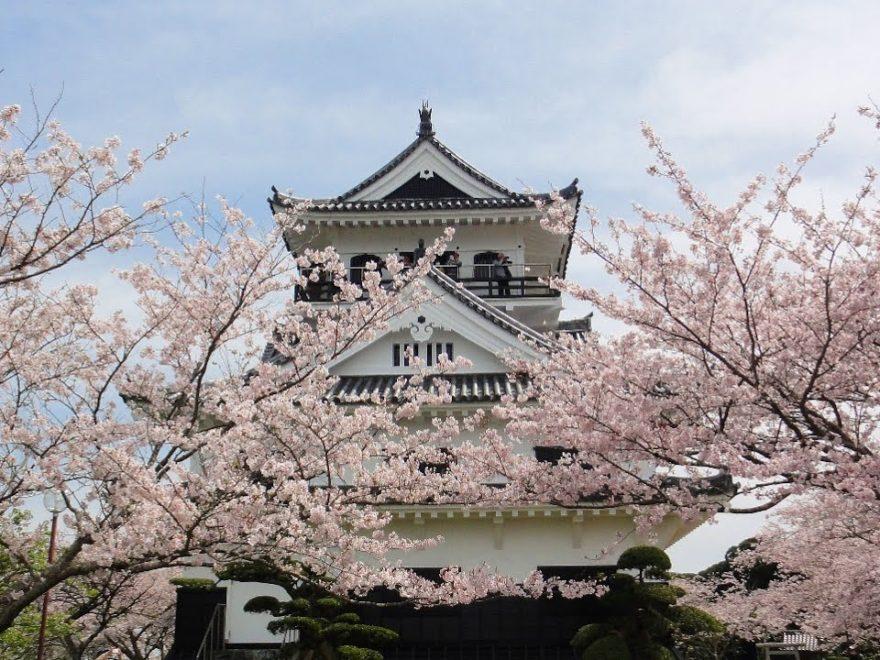 館山市 城山公園(千葉) | 2019年夜桜ライトアップ・見頃情報