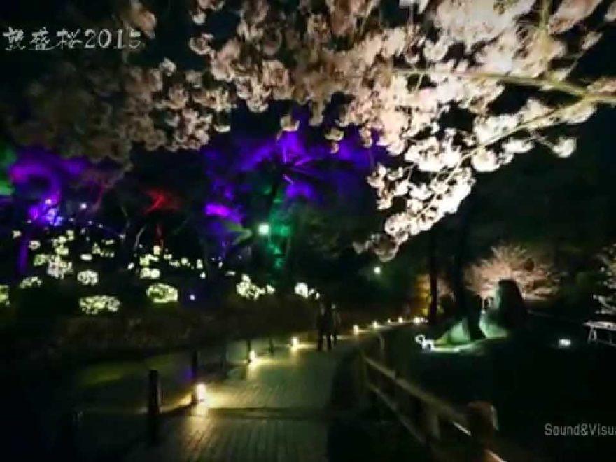 須磨浦公園・須磨浦山上遊園(兵庫) | 2019年夜桜ライトアップ・見頃情報