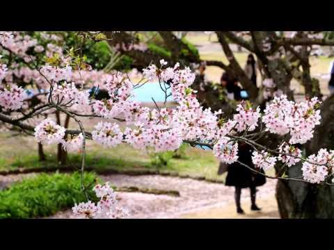 下関市 戦場ヶ原公園(山口) | 2019年夜桜ライトアップ・見頃情報
