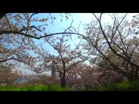 下関市 日和山公園(山口) | 2019年夜桜ライトアップ・見頃情報
