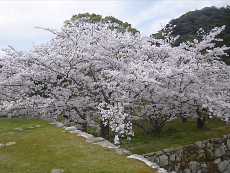 萩城跡 指月公園(山口) | 2019年夜桜ライトアップ・見頃情報