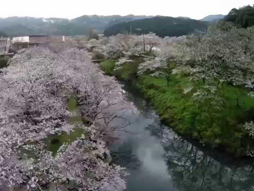 鹿野城跡公園(鳥取) | 2019年夜桜ライトアップ・見頃情報