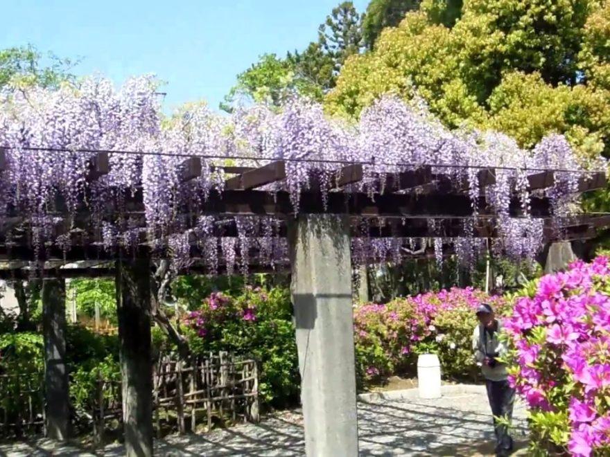 浅野公園(愛知) | 2019年つつじ祭り・見頃情報