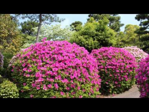 大府市 大倉公園・桃山公園(愛知) | 2019年つつじ祭り・見頃情報