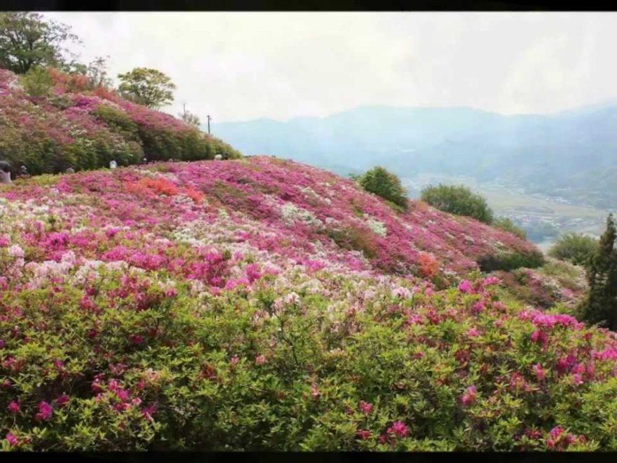冨士山公園(とみすやまこうえん)(愛媛) | 2019年つつじ祭り・見頃情報