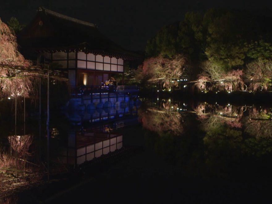 平安神宮(京都) | 2019年夜桜ライトアップ・見頃情報