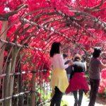 つつじが岡公園(群馬)   2021年つつじ祭り・見頃情報