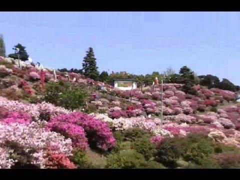 竹の古場公園(佐賀) | 2019年つつじ祭り・見頃情報