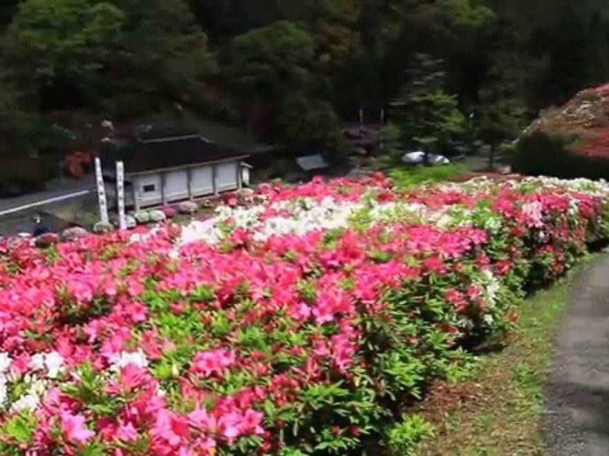 三隅公園・三隅神社(島根) | 2019年つつじ祭り・見頃情報