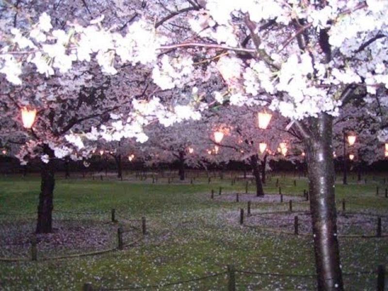 玉藻公園桜ライトアップ画像