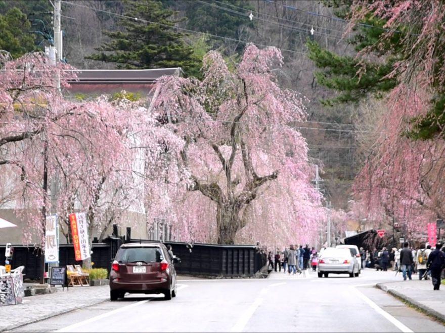 角館武家屋敷通り(秋田) | 2019年夜桜ライトアップ・見頃情報