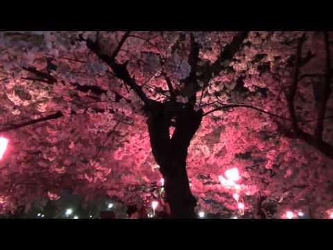 鶴舞公園(愛知) | 2019年夜桜ライトアップ・見頃情報