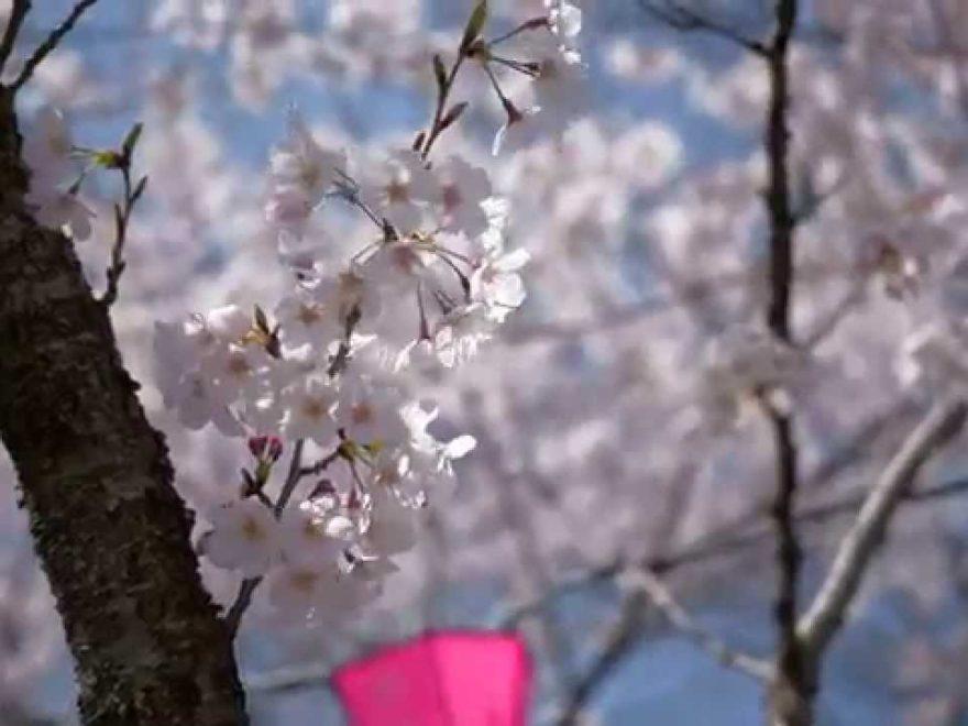 浜松城公園(静岡) | 2019年夜桜ライトアップ・見頃情報