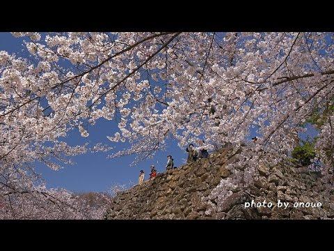 小諸城址 懐古園(長野) | 2019年夜桜ライトアップ・見頃情報