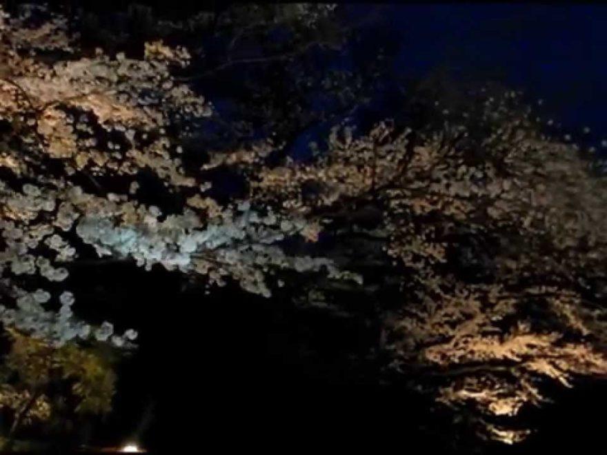 鑁阿寺(ばんなじ)(栃木) | 2019年夜桜ライトアップ・見頃情報