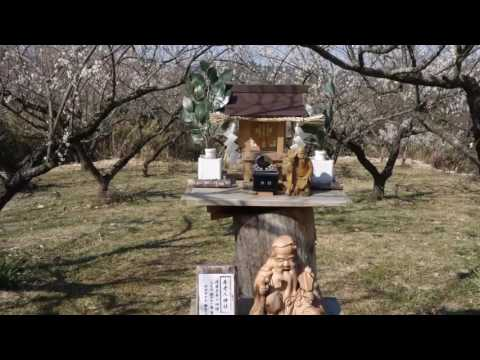 満汐梅林(広島) | 2019年梅まつり・見頃情報
