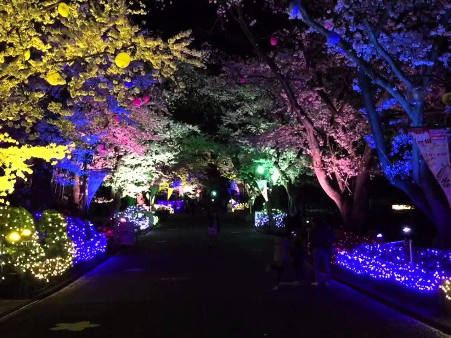 よみうりランド(東京) | 2019年夜桜ライトアップ・見頃情報