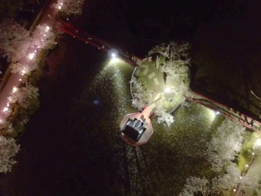 茂原公園(千葉) | 2019年夜桜ライトアップ・見頃情報