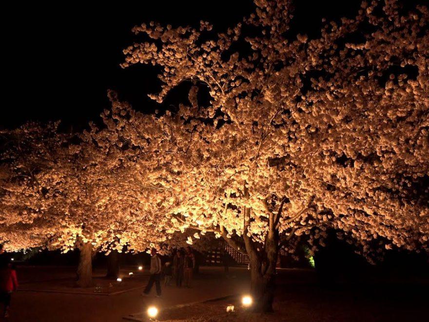 松代城跡(長野) | 2019年夜桜ライトアップ・見頃情報画像