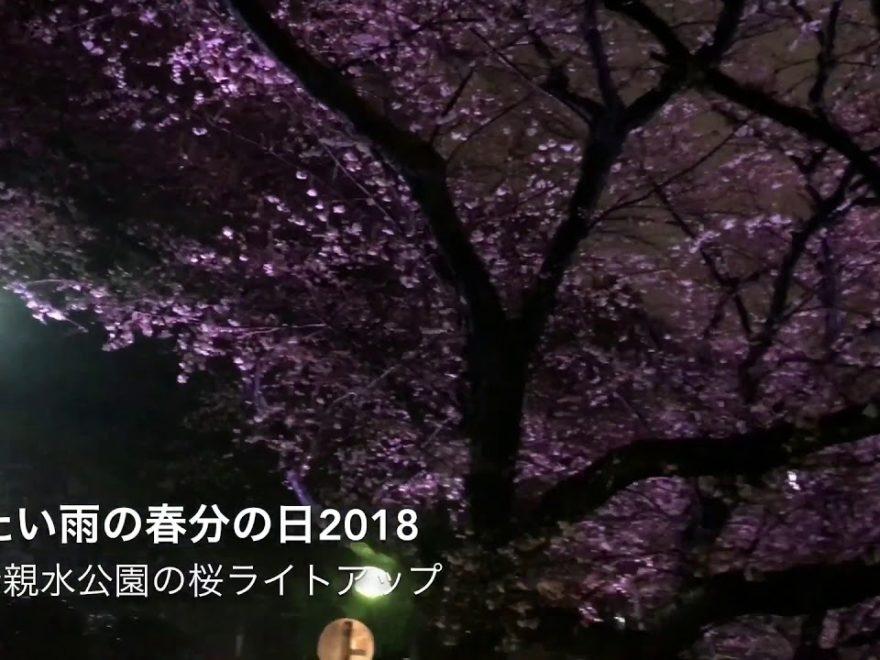 音無親水公園(東京) | 2019年夜桜ライトアップ・見頃情報画像