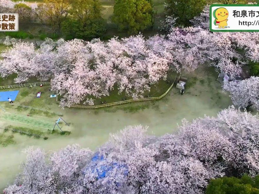 黒鳥山公園(大阪) | 2019年夜桜ライトアップ・見頃情報