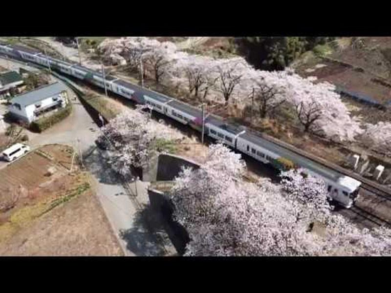 山梨甚六桜画像