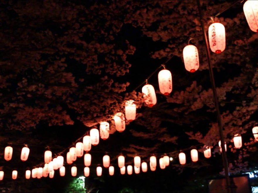 石上神宮外苑公園(奈良) | 2019年夜桜ライトアップ・見頃情報