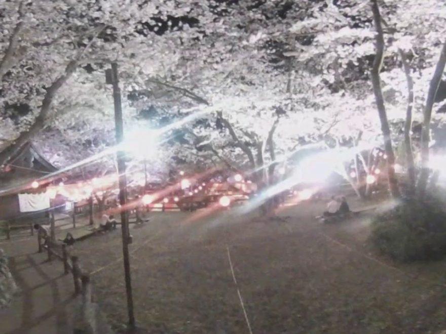 八坂神社御殿山 桜画像