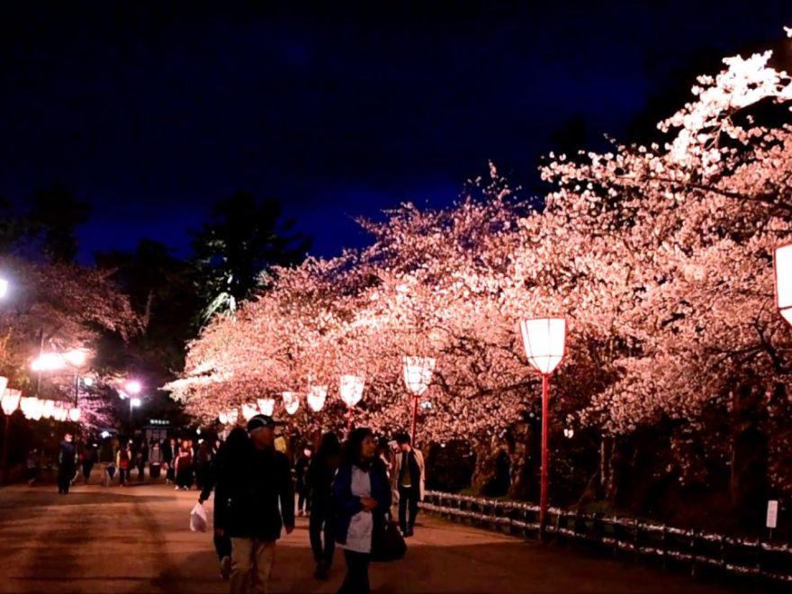弘前公園(青森) | 2019年夜桜ライトアップ・見頃情報
