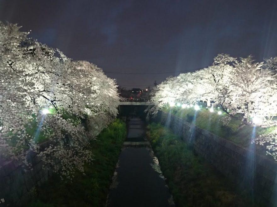 山崎川 四季の道(愛知) | 2019年夜桜ライトアップ・見頃情報画像