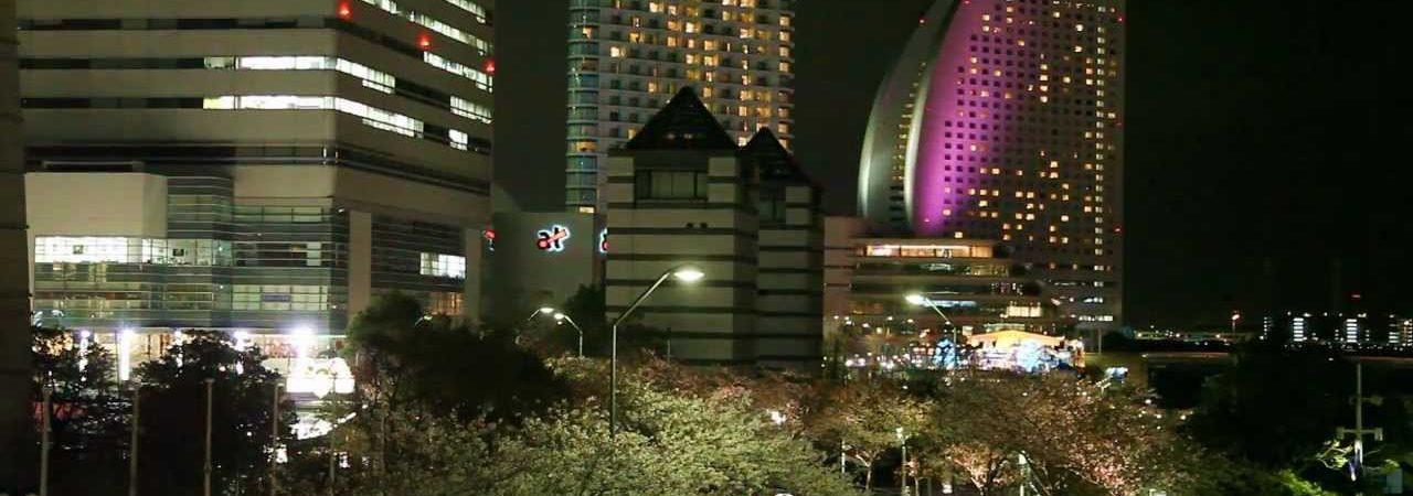 横浜みなとみらい さくら通り(神奈川) | 2019年夜桜ライトアップ・見頃情報