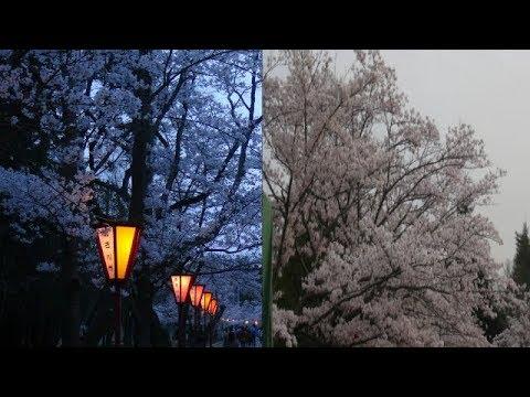 日岡山公園(兵庫) | 2019年夜桜ライトアップ・見頃情報