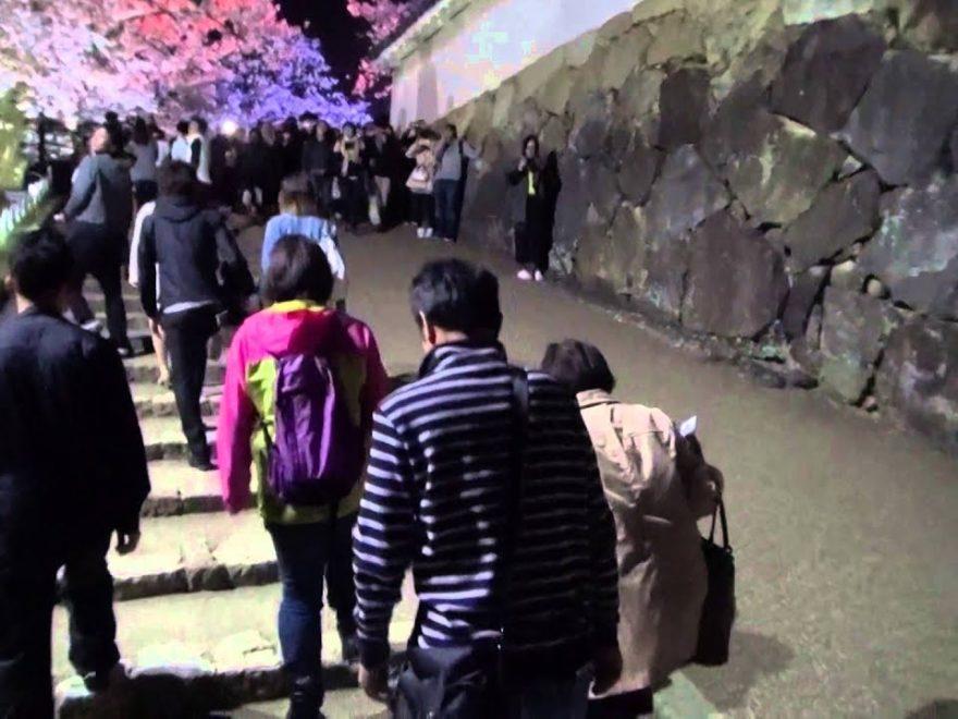 姫路城 西の丸庭園(兵庫) | 2019年夜桜ライトアップ・見頃情報