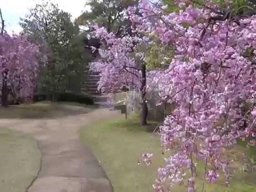 姫路城 好古園(兵庫) | 2019年夜桜ライトアップ・見頃情報