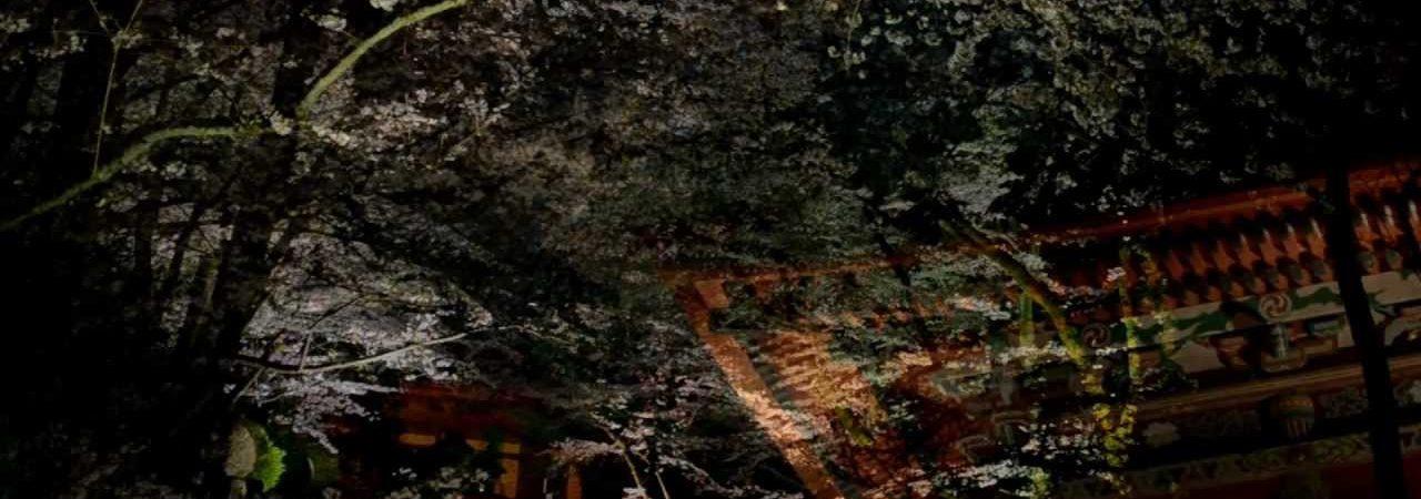 紀三井寺(きみいでら)(和歌山) | 2019年夜桜ライトアップ・見頃情報
