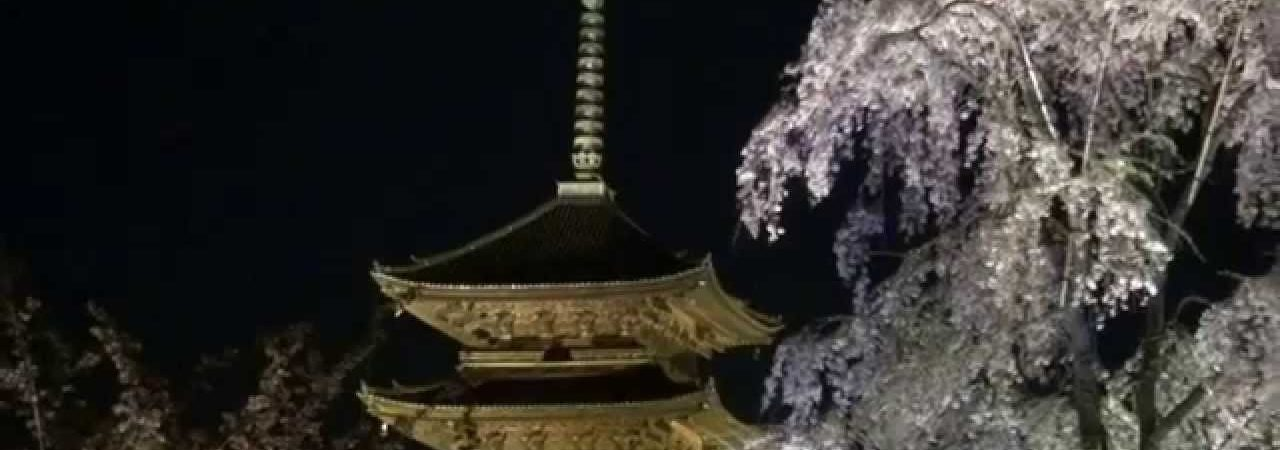 東寺(京都) | 2019年夜桜ライトアップ・見頃情報