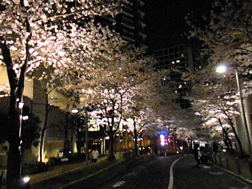 六本木さくら坂(東京) | 2019年夜桜ライトアップ・見頃情報