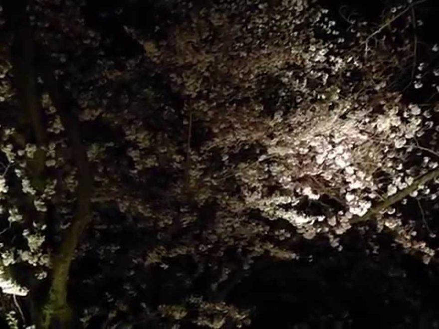 吉見百穴(埼玉) | 2019年夜桜ライトアップ・見頃情報