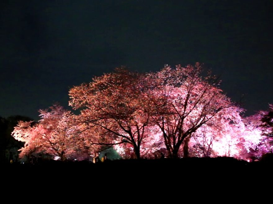福岡城跡 舞鶴公園(福岡) | 2019年夜桜ライトアップ・見頃情報