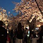 【一般不可・変更】造幣局 桜の通り抜け(大阪) | 2021年桜祭り・夜桜ライトアップ・見頃情報