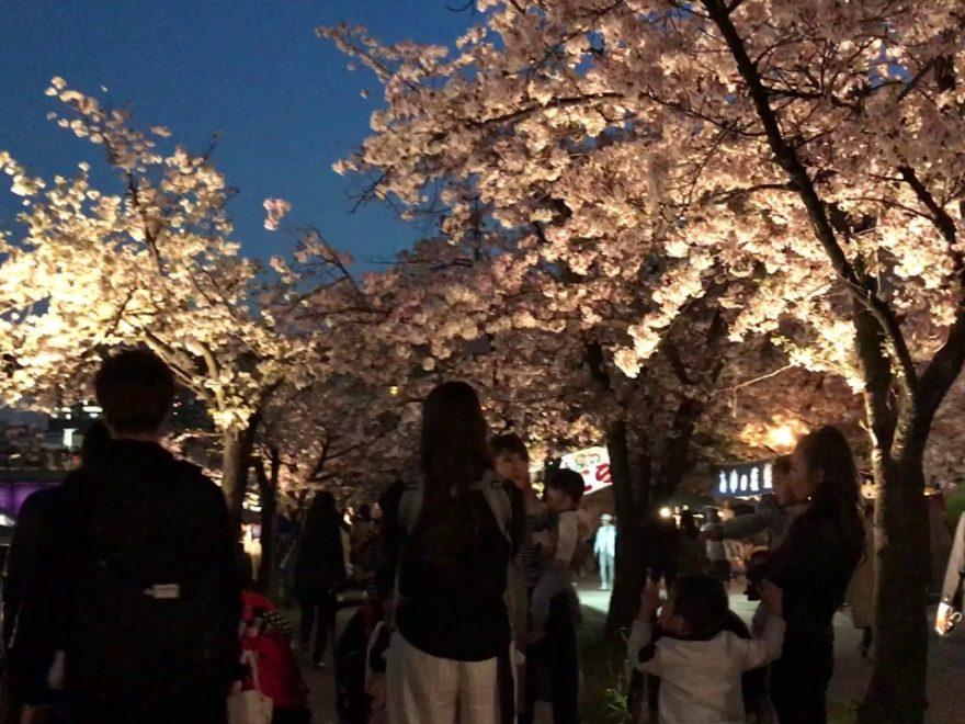 造幣局 桜の通り抜け(大阪) | 2019年夜桜ライトアップ・見頃情報