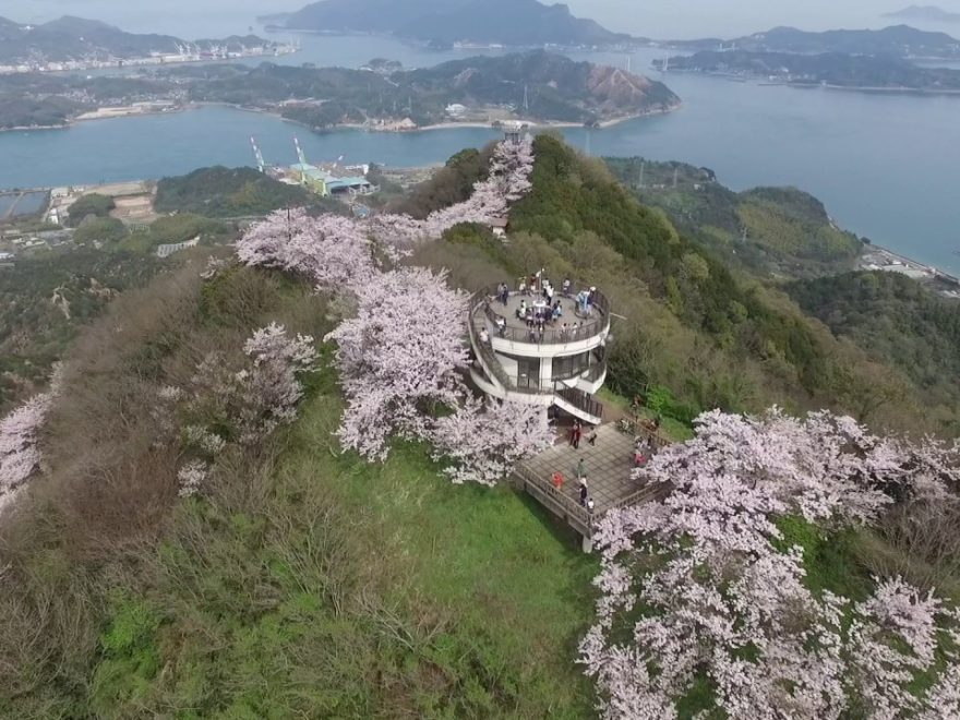 積善山三千本桜(愛媛) | 2019年夜桜ライトアップ・見頃情報
