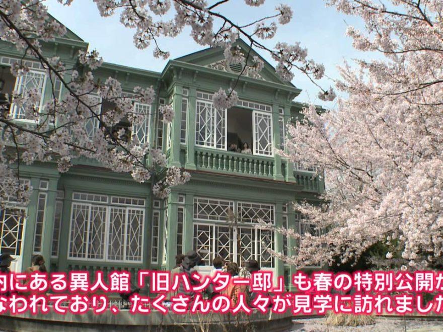 神戸市立王子動物園(兵庫) | 2019年夜桜ライトアップ・見頃情報