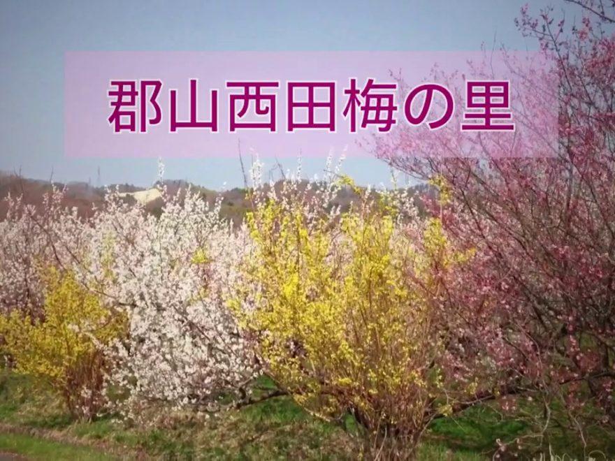 西田町 梅の里(福島)   2019年梅まつり・見頃情報