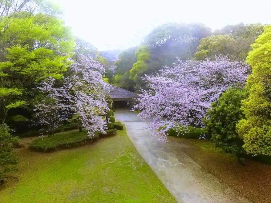 南楽園外堀(愛媛) | 2019年夜桜ライトアップ・見頃情報