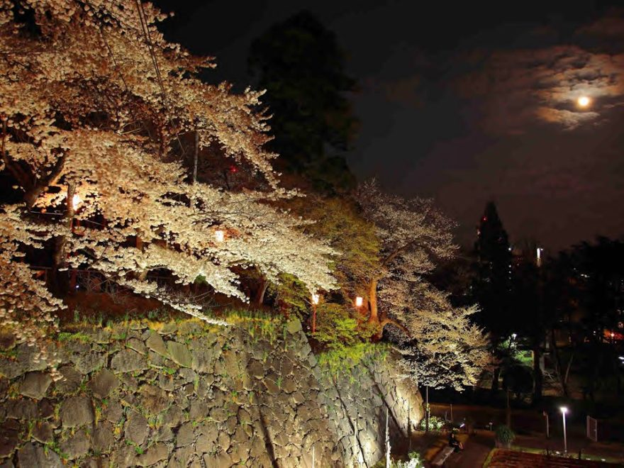 盛岡城跡公園(岩手公園)(岩手) | 2019年夜桜ライトアップ・見頃情報
