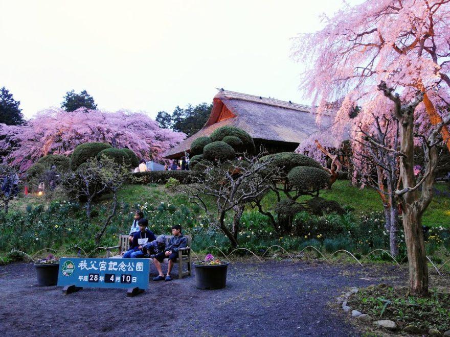 秩父宮記念公園(静岡) | 2019年夜桜ライトアップ・見頃情報