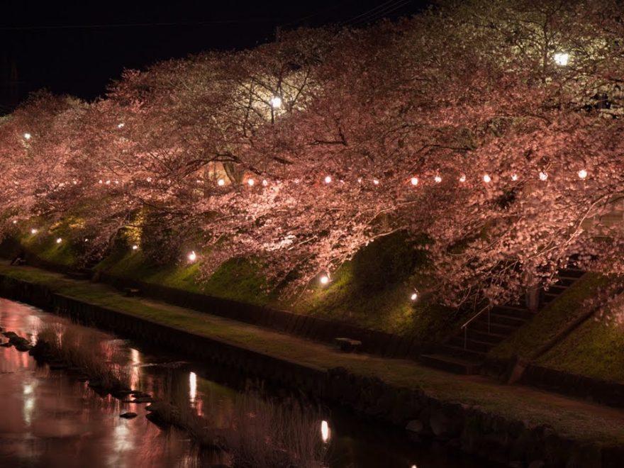 美祢市 厚狭川(山口) | 2019年夜桜ライトアップ・見頃情報