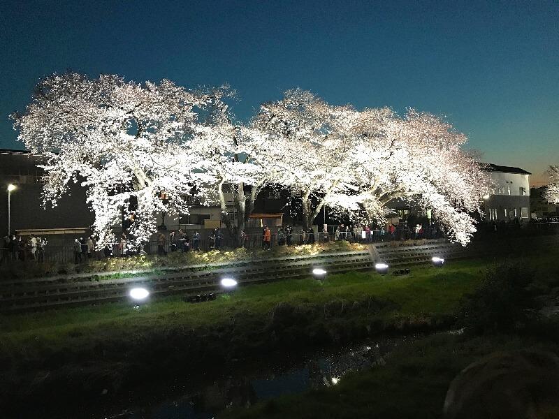 野川ライトアップ_001
