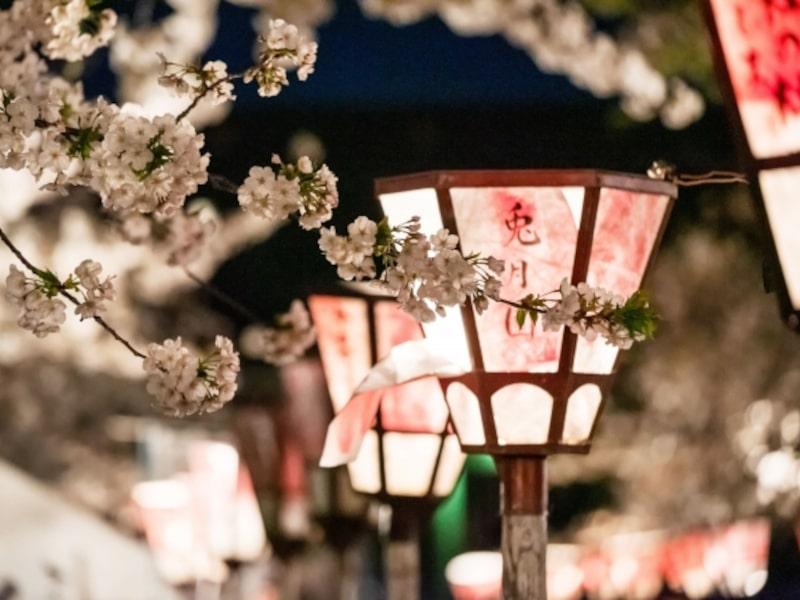 三嶋大社(静岡) | 2021年桜祭り・夜桜ライトアップ・見頃情報